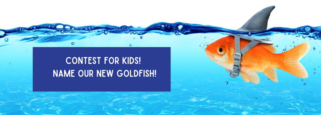 photo of goldfish